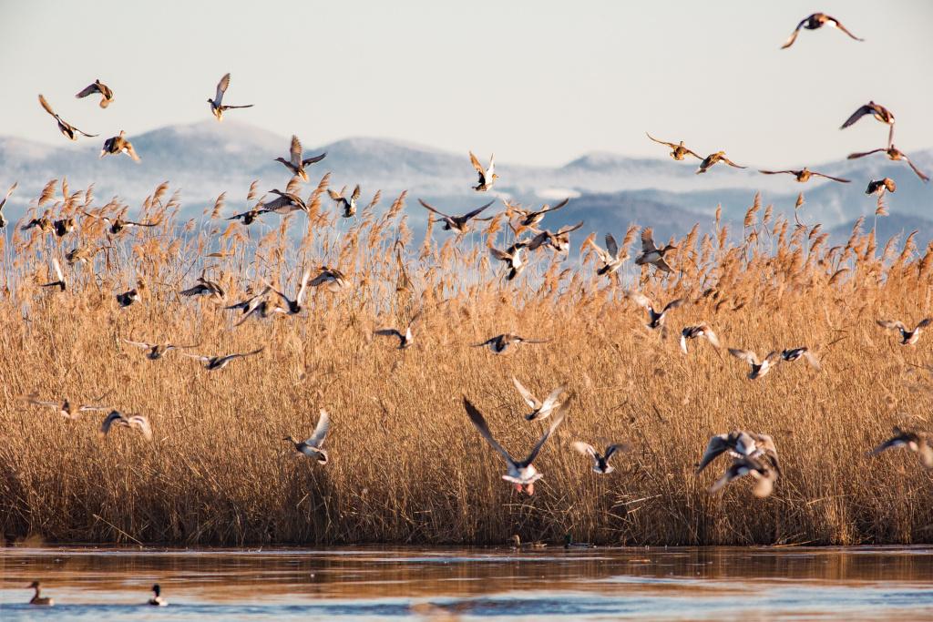 Birds at val cavanata