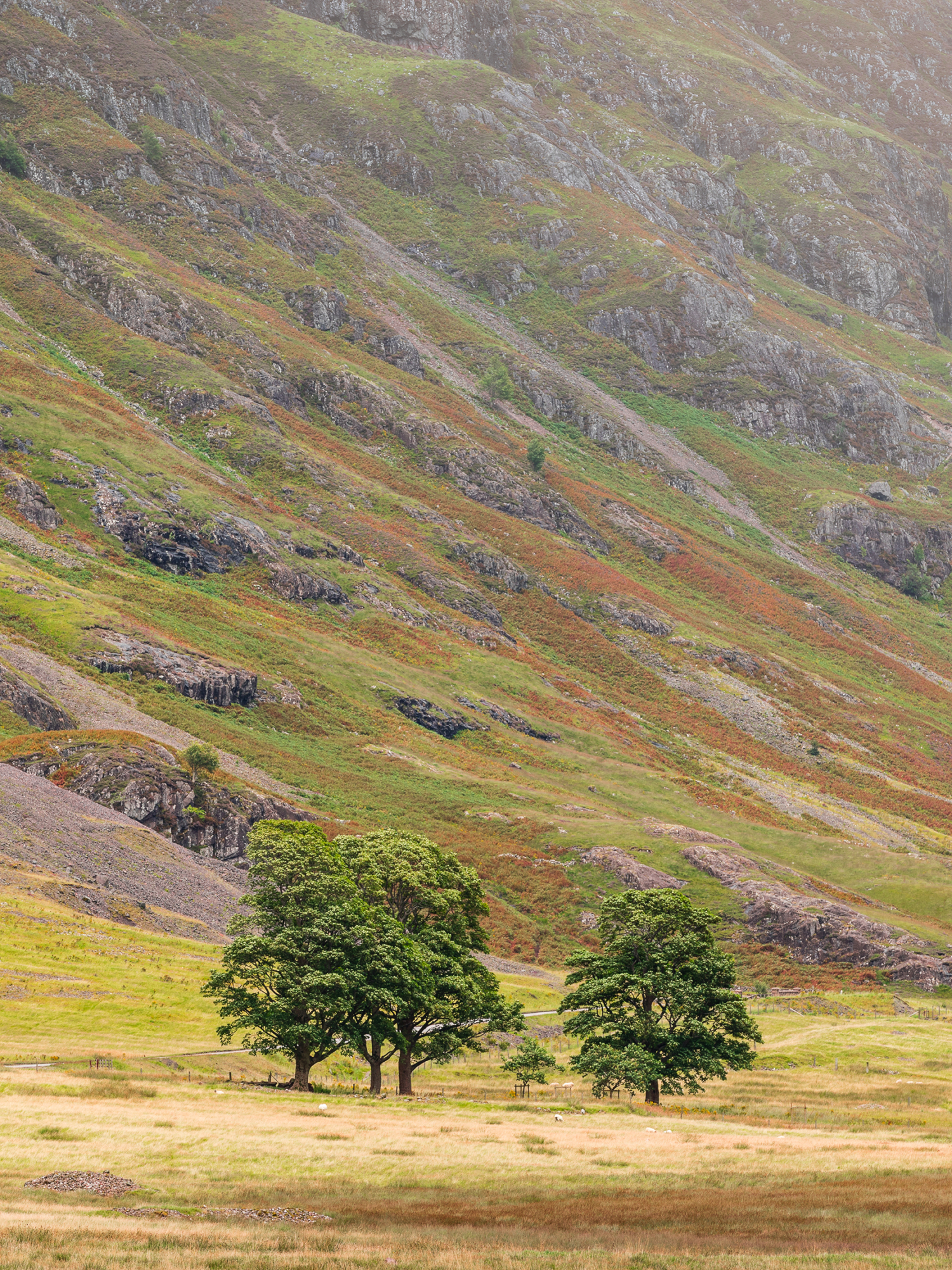 Lone trees in the Higlands